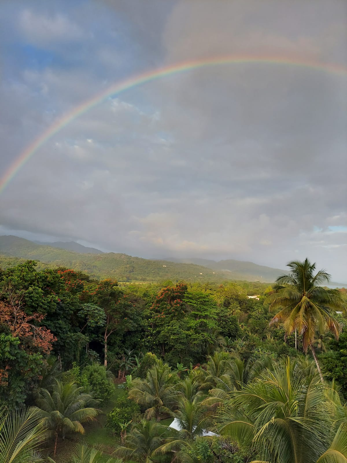 rainforest treetops with rainbow in the sky